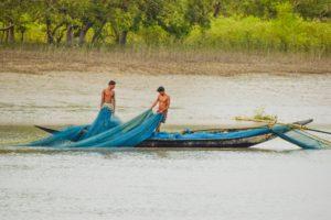 Life at Sundarban Forest
