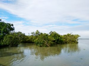 Submerged mangroves forest