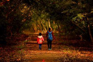 Forest walk bhitarkanika